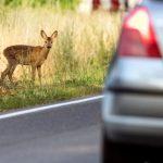 動物との接触事故は車両保険で補償される【鹿・犬・猫】