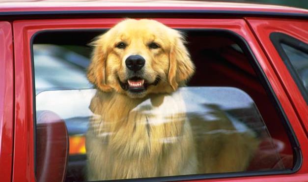 車に犬を乗せるときの注意点・準備したいグッズ