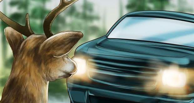 動物との接触・衝突事故で自動車保険は使えるのか