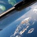 車についた鳥のフンやシミの落とし方・対策